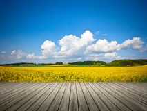 Raps field. An image of a raps field in Bavaria Germany Stock Photos
