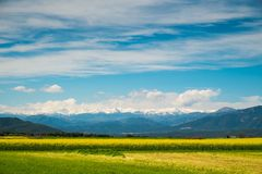 Raps field. With Pyrenees in distance Royalty Free Stock Photos