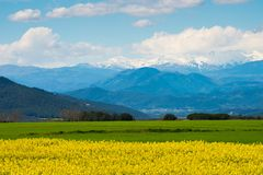 Raps field. With Pyrenees in distance Royalty Free Stock Photo