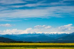 Raps field. With Pyrenees in distance Stock Image