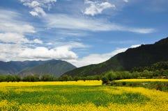 Raps und Wolke in Tibet Stockbilder