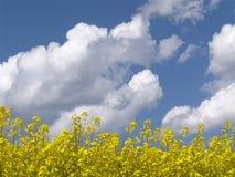 Raps + Wolken Stockbild