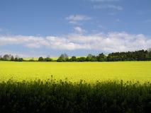 Rapsanlagen, Kingley-Tal, Sussex, England Lizenzfreies Stockfoto
