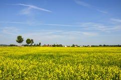 Rapsfeld Deutschlands (Bayern) Lizenzfreie Stockfotografie