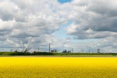 Rapsfeld gegen industriellen Hintergrund stockfotos