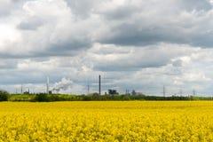 Rapsfeld gegen industriellen Hintergrund lizenzfreie stockfotos