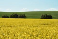 Rapsfeld im Ackerland unter blauem Himmel mit Wolken, in Süd-Mora Stockfotos