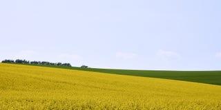 Rapsfeld im Ackerland unter blauem Himmel mit Wolken, in Süd-Mora Lizenzfreie Stockfotos
