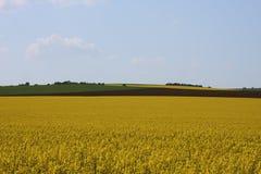 Rapsfeld im Ackerland unter blauem Himmel mit Wolken, in Süd-Mora Lizenzfreies Stockfoto