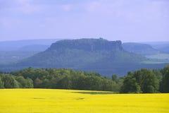 Rapsfeld im Vorfrühling in Sachsen, Deutschland Lizenzfreie Stockfotos