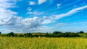 Rapsfeld und blauer Himmel mit dem Wolkenbewegen stock video footage