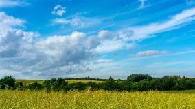 Rapsfeld und blauer Himmel mit dem Wolkenbewegen stock video