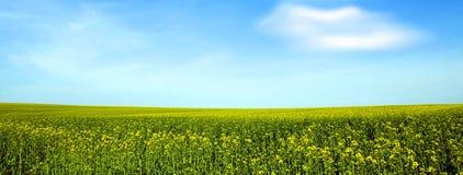 Rapsfeld und ein blauer Himmel Lizenzfreie Stockfotos