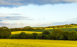 Rapsfeld unter blauem Himmel Stockbild
