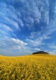Rapsfeld unter Himmel Lizenzfreies Stockbild