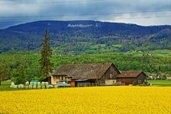 Rapsfeldbauernhofansicht die Schweiz Lizenzfreie Stockbilder
