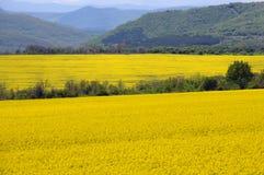 Rapsfelder und grüne Hügel in Bulgarien Stockfoto