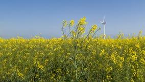 Rapsfield und eine Windkraftanlage stockfoto