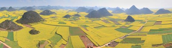 Rapsfröblommor av Luoping i Yunnan Kina Arkivbild