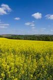 Rapsfröfält, Hampshire, landskap fotografering för bildbyråer
