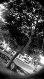 Rapsodia dell'albero nel nero fotografia stock libera da diritti