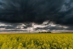Rapssamen-Feld mit dunklem stürmischem bewölktem Himmel im Hintergrund Stockfotos