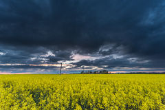 Rapssamen-Feld mit stürmischem bewölktem Himmel im Hintergrund Lizenzfreie Stockfotografie