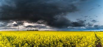 Rapssamen-Feld mit stürmischem bewölktem Himmel im Hintergrund USA, Kolorado-, Cortez, a-Besuch und ein runder Weg im nationalen  Stockfotos
