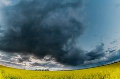 Rapssamen-Feld mit stürmischem bewölktem Himmel im Hintergrund Weitwinkelpanorama Stockbilder