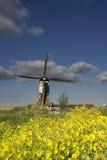 Rapssamen nahe der Broekmolen-Windmühle Lizenzfreies Stockbild