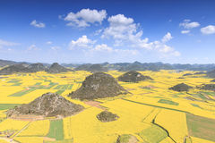 Rapssamenblumen von Luoping in Yunnan China Lizenzfreies Stockfoto