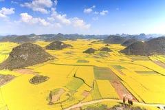 Rapssamenblumen von Luoping in Yunnan China Lizenzfreies Stockbild