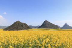Rapssamenblumen von Luoping in Yunnan China Lizenzfreie Stockbilder