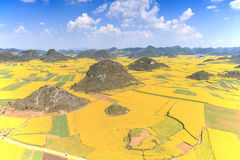 Rapssamenblumen von Luoping in Yunnan China Stockfoto