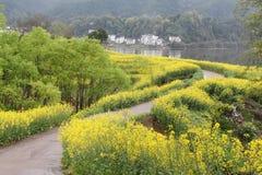 Rapssamenblumenblüte im chinesischen Dorf Lizenzfreies Stockfoto