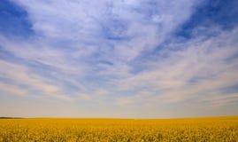 Rapssamenfeld in der Blüte bis zu den Skylinen gegen blauen Himmel Lizenzfreie Stockfotografie