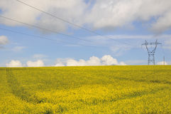 Rapssamenfeld mit Stromleitung Stockfotografie
