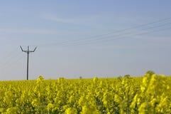 Rapssamenfeld + Stromleitungen Lizenzfreies Stockfoto