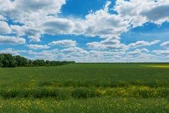 Rapssamengelbgrünfeld im Frühjahr, abstraktes natürliches eco Saisonblumenhintergrund lizenzfreies stockbild
