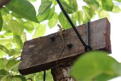 Raptile klättring på trädet arkivfoton