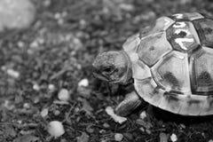 Raptiles d'animal de compagnie de mini-serre de tortue petits tropicaux Images libres de droits