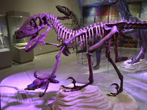 Raptor Exhibit in Merida Yucatan Stock Photo
