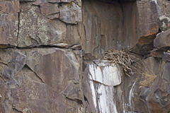 Raptor Nest High On Lava Rock Face Stock Photos