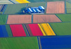 Rare aerial view of colorful tulip fields in Holland, Netherlands royalty free stock images