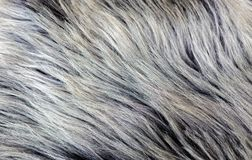 Rare breed sheepskin rugs fleece details view from top. Natural, genuine, rare breed sheepskin rugs fleece details view from top. Grey texture shows different Royalty Free Stock Photography