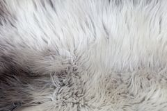 Rare breed sheepskin rugs fleece details view from top. Natural, genuine, rare breed sheepskin rugs fleece details view from top. Grey texture shows different Royalty Free Stock Image