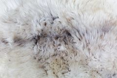 Rare breed sheepskin rugs fleece details view from top. Natural, genuine, rare breed sheepskin rugs fleece details view from top. Grey texture shows different Stock Images