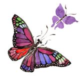 Rare butterflies wild insect in a watercolor style isolated. Aquarelle wild insect for background, texture, wrapper pattern or tattoo stock photos