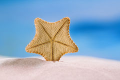 Rare deepwater starfish with ocean, on white sand beach, sky and Royalty Free Stock Photos