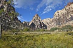 Rare Desert Meadow Royalty Free Stock Photos